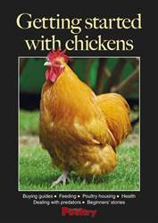 Getting started with chickens issue Getting started with chickens