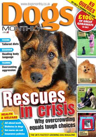 Dogs Monthly issue Dogs Monthly FREE SAMPLE