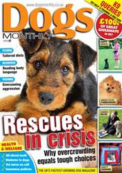 Dogs Monthly FREE SAMPLE issue Dogs Monthly FREE SAMPLE