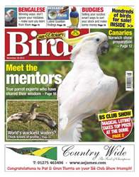 Cage & Aviary Birds issue Cage & Aviary 28 November 2012
