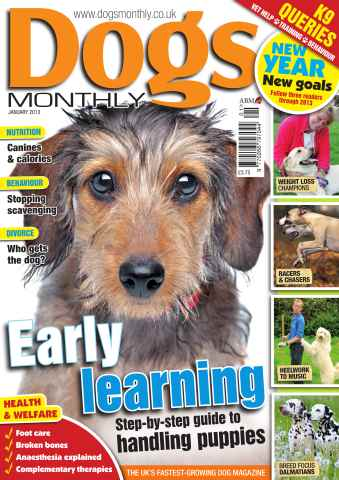 Dogs Monthly issue Dogs Monthly January 2013