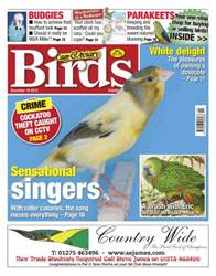 Cage & Aviary Birds issue Cage & Aviary 19 December 2012