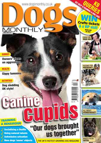 Dogs Monthly issue Dogs Monthly February 2013