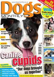 Dogs Monthly February 2013 issue Dogs Monthly February 2013