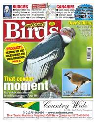 Cage & Aviary Birds issue Cage & Aviary 20 February 2013