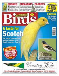 Cage & Aviary Birds issue Cage & Aviary 13 March 2013