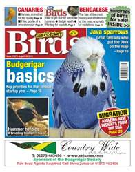 Cage & Aviary Birds issue No.5767 Budgerigar basics