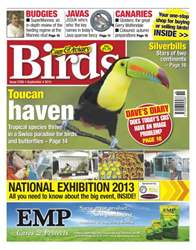Cage & Aviary Birds issue Issue 5768 Toucan haven