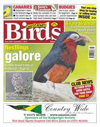 Cage & Aviary Birds issue No.5769 Nestlings Galore
