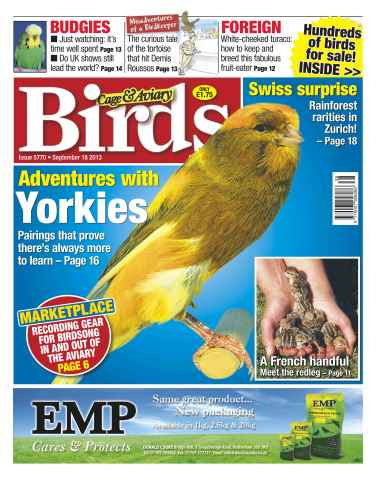 Cage & Aviary Birds issue No.5770 Adventures with Yorkies