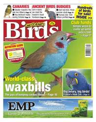 Cage & Aviary Birds issue No.5772 World-class Waxbills