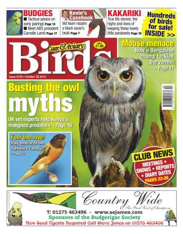 Cage & Aviary Birds issue No.5776 Busting the Owl Myths