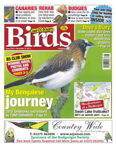 Cage & Aviary Birds issue No.5780 My Bengalese Journey