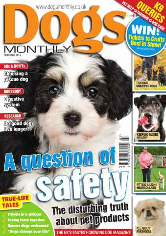 Dogs Monthly issue Feb-14