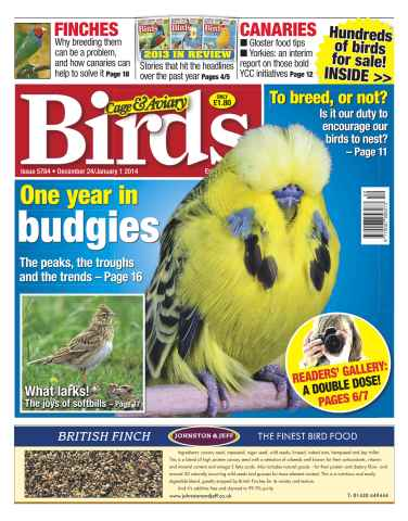 Cage & Aviary Birds issue No.5784 A Year in Budgies