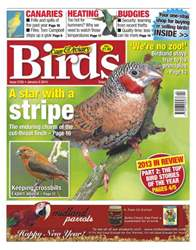 Cage & Aviary Birds issue No.5785 The Star with a Stripe