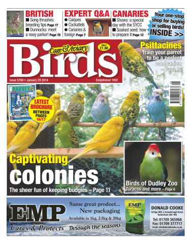 Cage & Aviary Birds issue No.5788 Captivating colonies