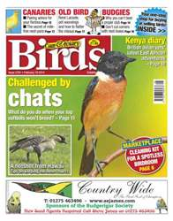 Cage & Aviary Birds issue No.5791 Challenged by Chats