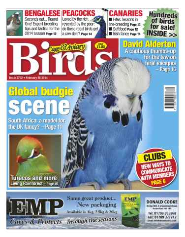 Cage & Aviary Birds issue No.5792 Global Budgie Scene