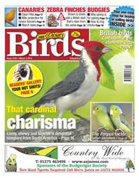 Cage & Aviary Birds issue No.5793 That Cardinal Charisma