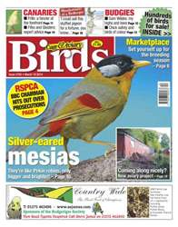 Cage & Aviary Birds issue No.5795 Silver-Eared Mesias