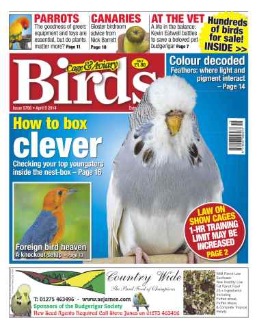 Cage & Aviary Birds issue No.5798 How to Box Clever