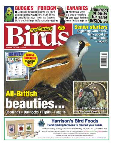 Cage & Aviary Birds issue No.5800 All-British beauties...
