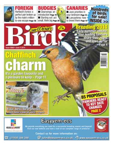 Cage & Aviary Birds issue No.5806 Chaffinch Charm