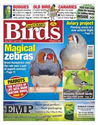 Cage & Aviary Birds issue No.5807 Magical Zebras