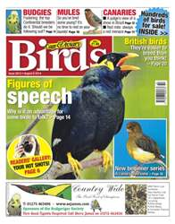 Cage & Aviary Birds issue No.5815 Figures of Speech