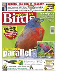 Cage & Aviary Birds issue No.5821 Beauty Without Parellel
