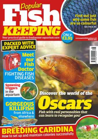 Popular Fish Keeping issue No.7 Discover the world of Oscars
