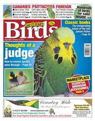 Cage & Aviary Birds issue No.5825 Thoughts of the Judge