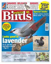 Cage & Aviary Birds issue No.5830 Looks good in Lavender