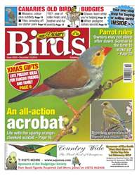 Cage & Aviary Birds issue No.5833 An All-Action Acrobat