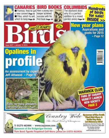 Cage & Aviary Birds issue No.5837 Opalines in profile