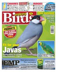 Cage & Aviary Birds issue No.5838 Fit For Your Javas