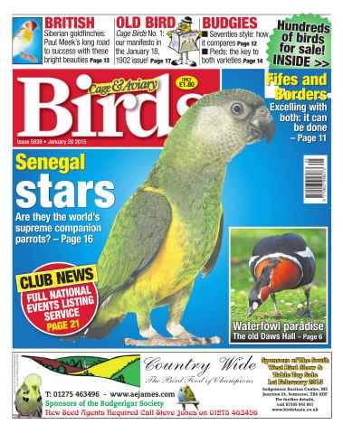 Cage & Aviary Birds issue No.5839 Senegal Stars