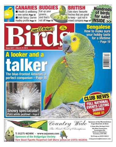 Cage & Aviary Birds issue No.5847 A looker and a Talker