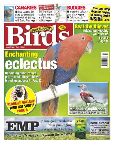 Cage & Aviary Birds issue No.5848 Enchanting Eclectus