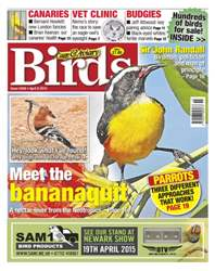 Cage & Aviary Birds issue No.5849 Meet the Bananaquit