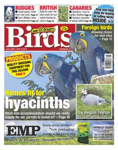 Cage & Aviary Birds issue No.5850 Home Fit For Hyacinths