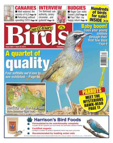 Cage & Aviary Birds issue No.5851 A Quartet of Quality