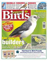 Cage & Aviary Birds issue No.5852 Ever Busy Builder