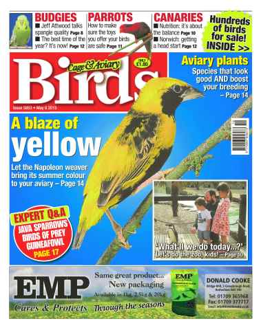 Cage & Aviary Birds issue No.5853 A Blaze of Yellow