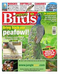 Cage & Aviary Birds issue No.5854 Bring Back Our Peafowl!